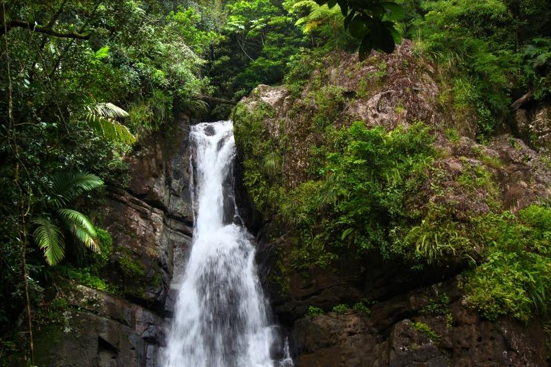 El Bosque Nacional El Yunque