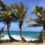 Playa el Pastillo: Isabela, Puerto Rico