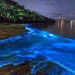 Melaya's Tours Bahia Bioluminiscente Vieques, Puerto Rico