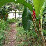 Eye on the Rainforest Patillas, Puerto Rico