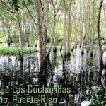 Reserva Natural Ciénagas de las Cucharillas Cataño, Puerto Rico