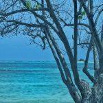 Isla Palominito