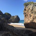 Playa Survival